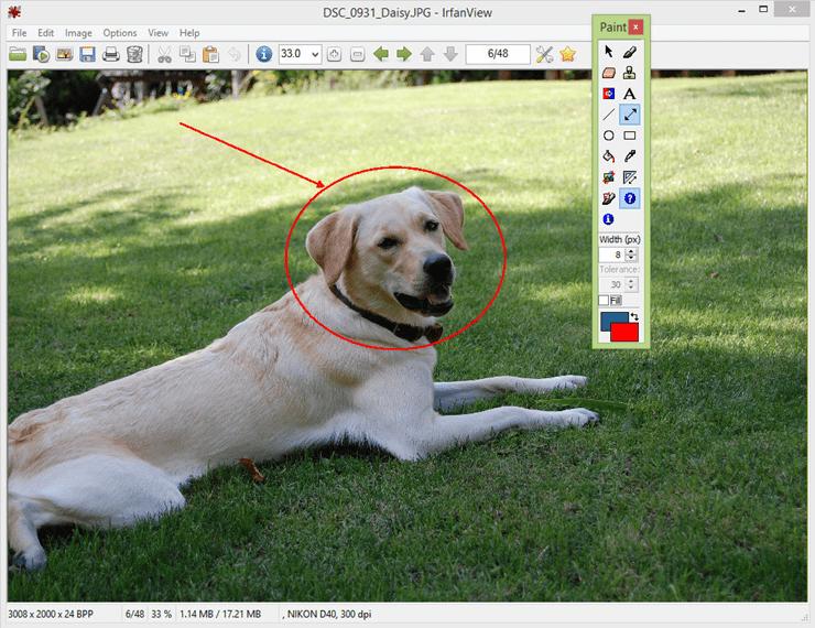 программа для просмотра фотографий windows
